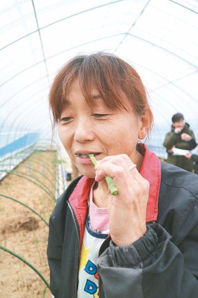 鴫原圭子嘗著蘆筍,說著「真的很好吃啊」。 東京記者蔡佩芳/攝影