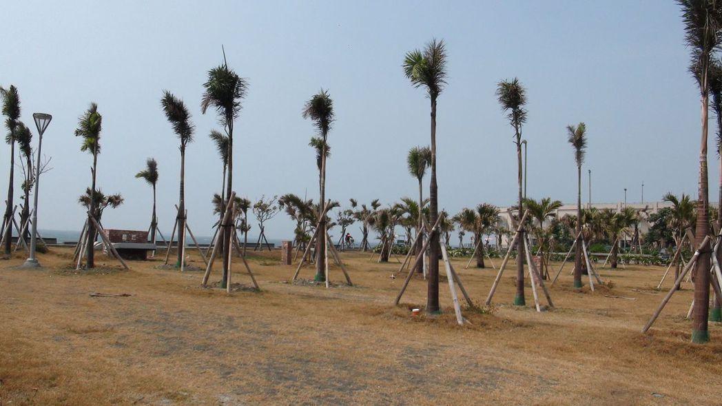 高雄市觀光局規畫的旗津青年露營區,與海灘距離近。記者楊濡嘉/攝影