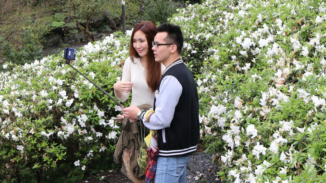 遊客開心和杜鵑花合影。記者曾健祐/攝影