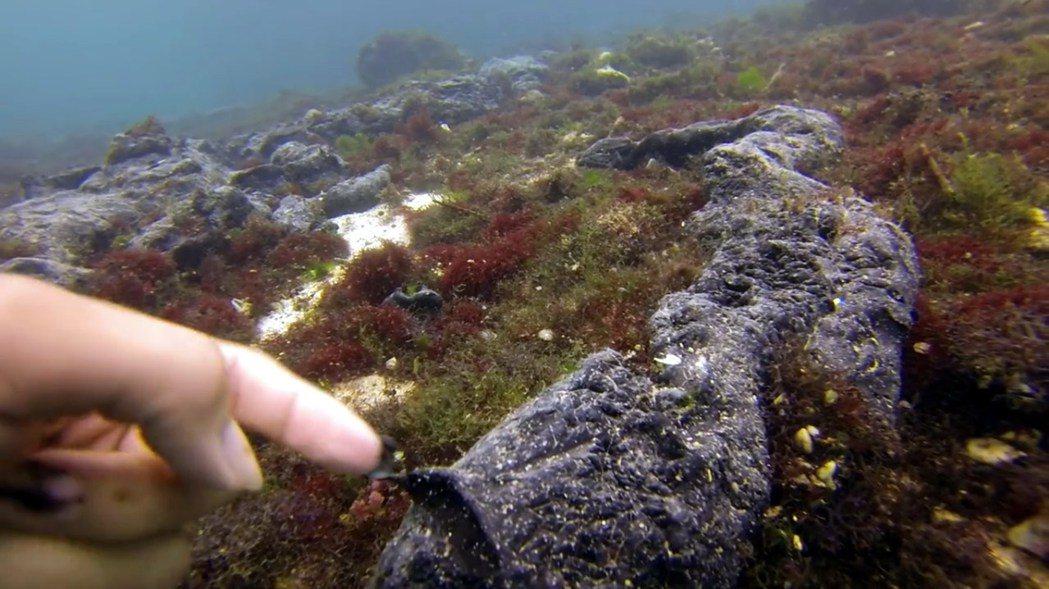 綠島重油汙染,初期潛水人員記錄到汙染較嚴重的中寮港澳,零星漂浮著團塊或成條狀的黑...