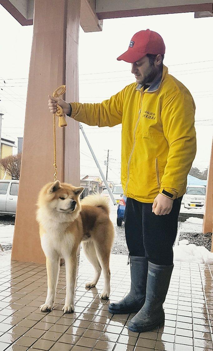 到大館市與秋田犬近距離互動。