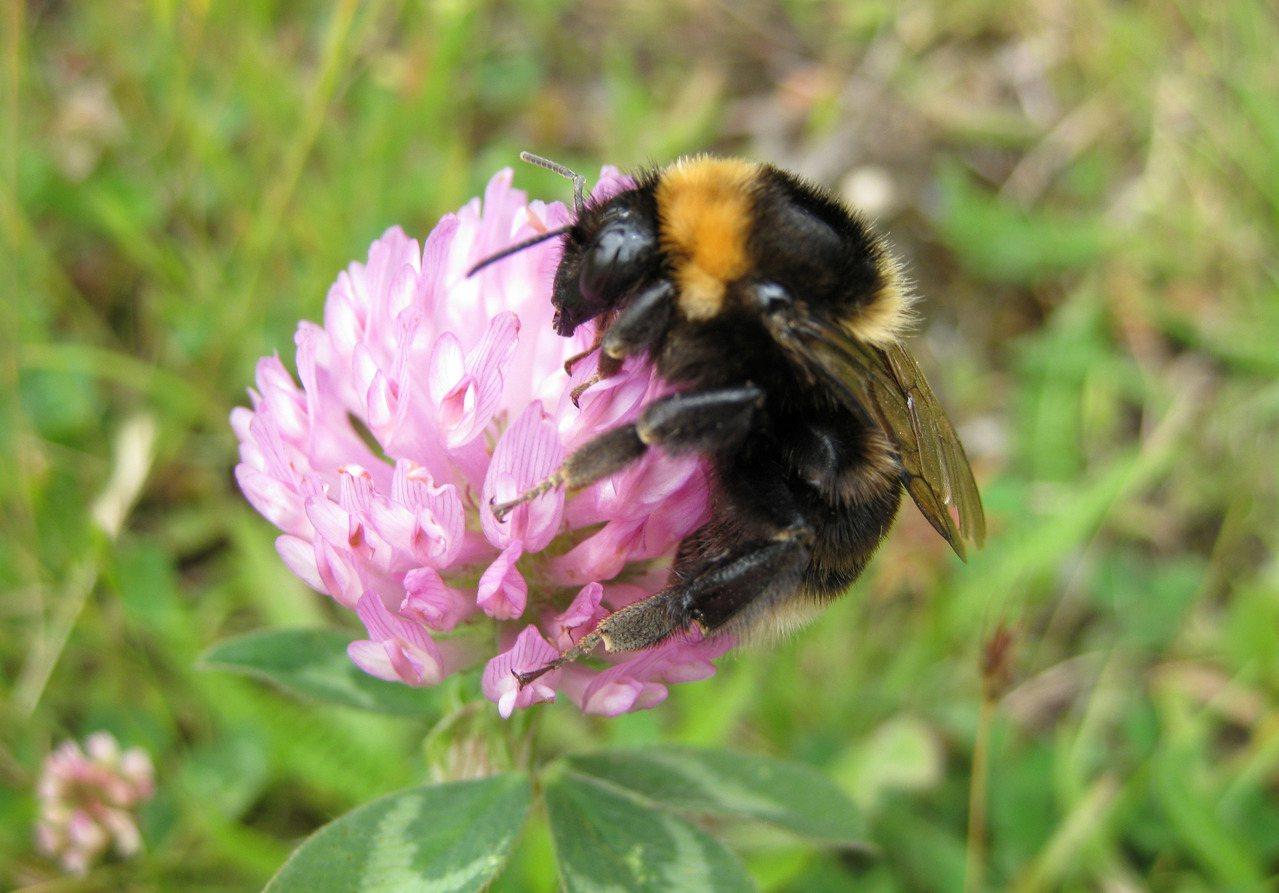紐西蘭警方和養蜂業者14日表示,由於蜂蜜價格大幅飆漲,紐西蘭的蜜蜂正遭到有組織的...