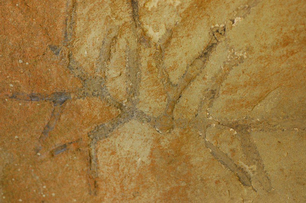東眼山化石區的生痕化石,是古代生物活動時所遺留的痕跡。 圖/東眼山自然教育中心提...
