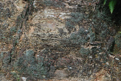 岩石因為風化作用而造成的「洋蔥狀風化」。 記者張雅婷/攝影
