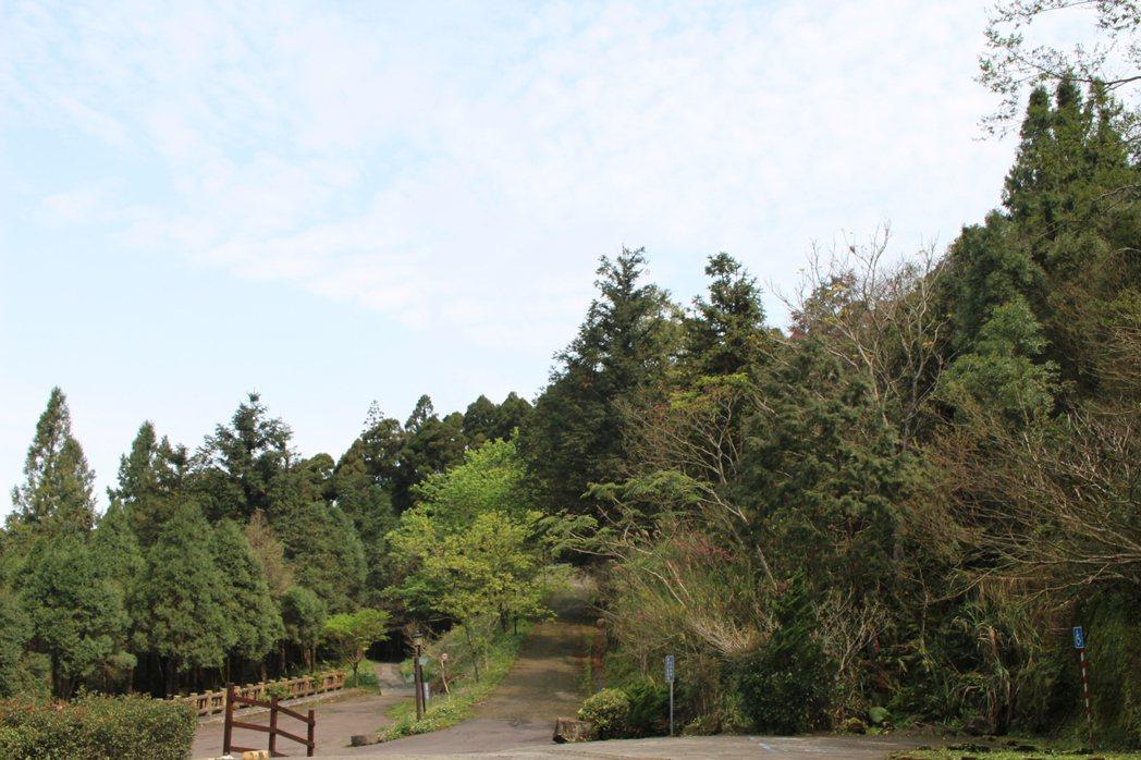 東眼山步道多元,平時就吸引相當多民眾前往健行踏青。 記者張雅婷/攝影