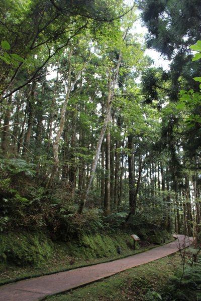 東眼山有許多步道,適合各年齡層民眾輕鬆走。 記者張雅婷/攝影