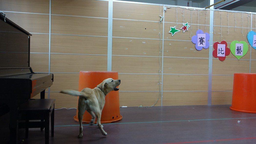 高市消防局搜救犬馴養中心帶領犬隻走進校園宣導,搜救犬柯林找到藏匿在桶子內的學童後...