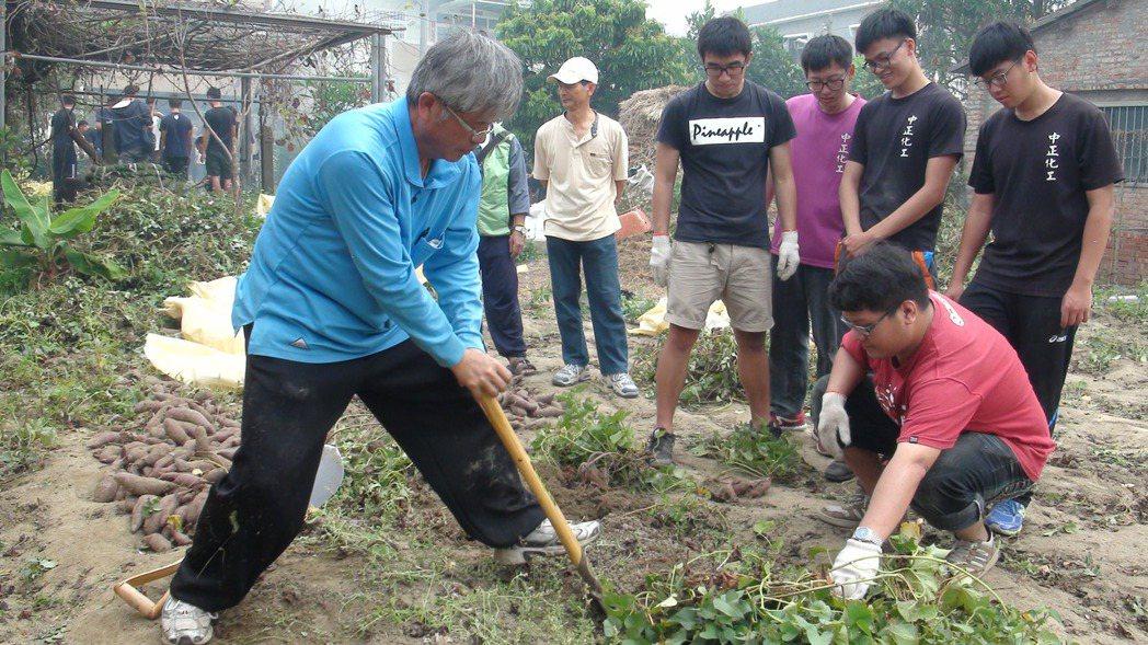 王崑成(左)教大學生們如何拿鋤頭挖地瓜。 記者謝恩得/攝影