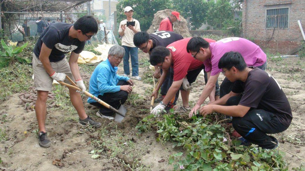 大學生要烤地瓜自己挖出,體會務農辛勞。 記者謝恩得/攝影