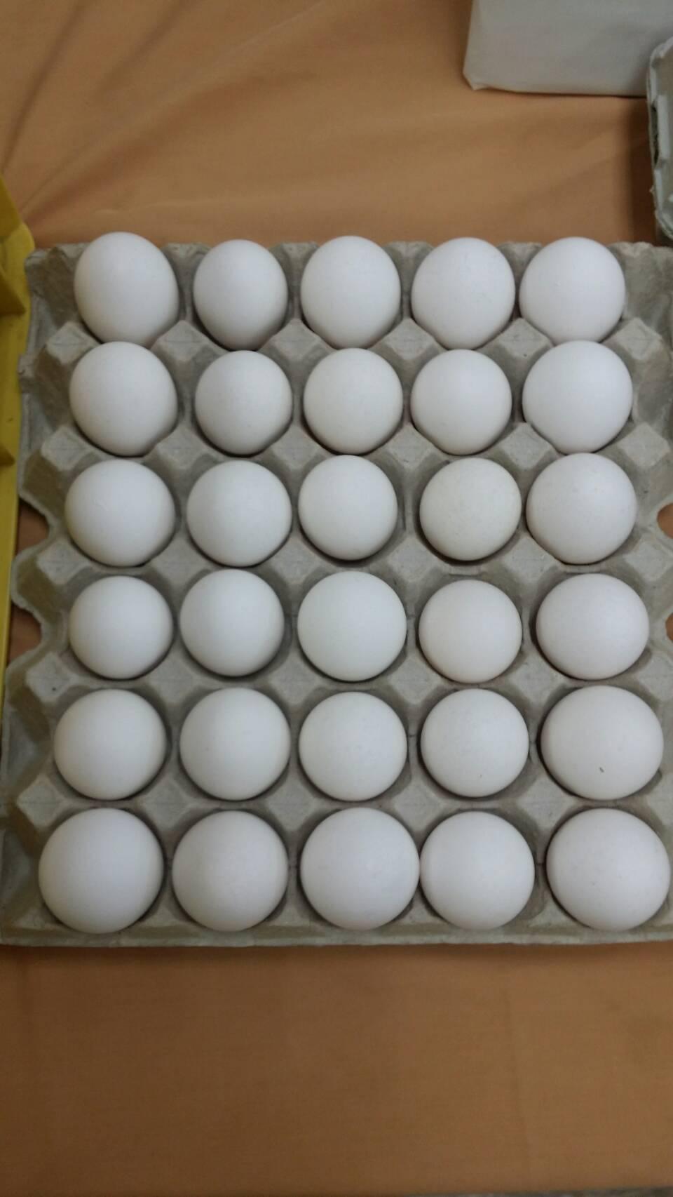 業者反彈力道大,雞蛋一次性包材政策鬆動。記者彭宣雅/攝影