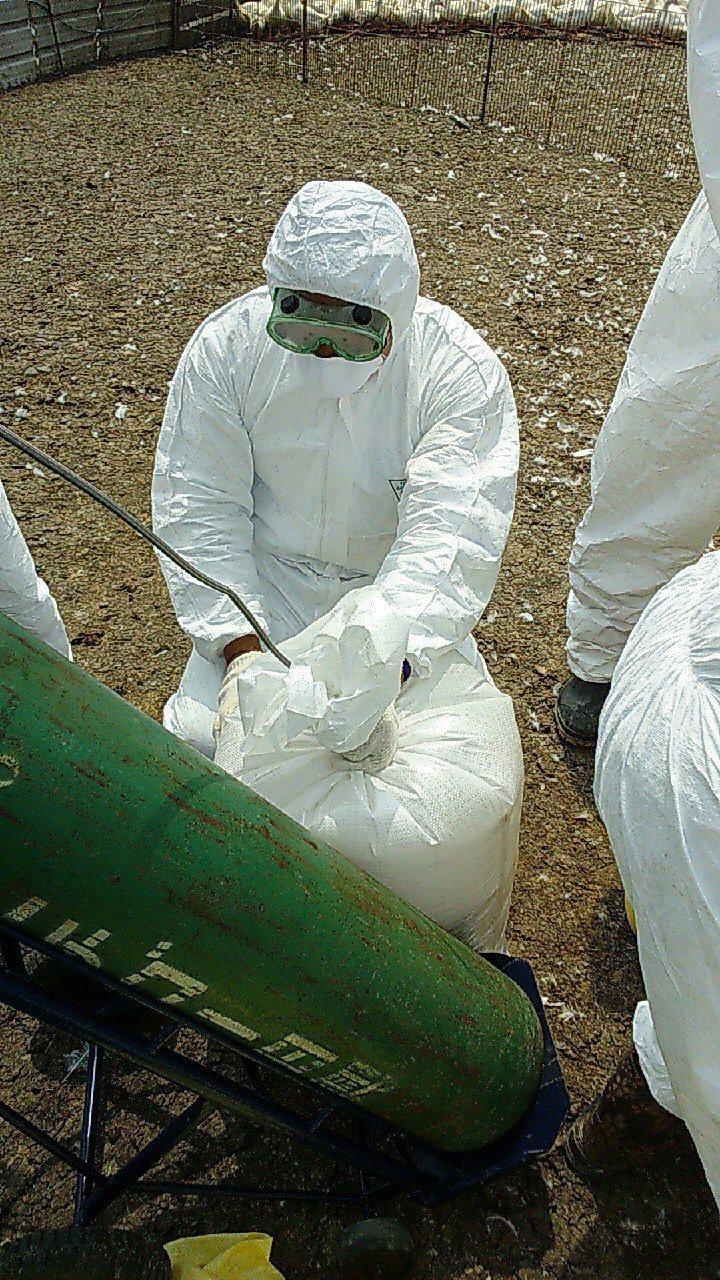 彰化縣大城鄉又一肉鴨場確診有H5N2亞型高病原性禽流感病毒,防疫人員今天撲殺15...