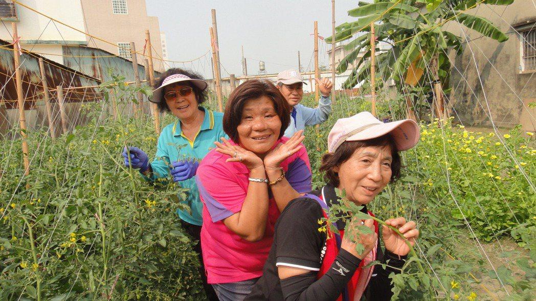 屏東縣林邊鄉仁和村和平小花園荒地整過整建,成為當地社區深受歡迎的番茄果園。記者蔣...