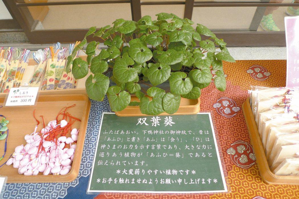 象徵締結良緣的雙葉葵是下鴨神社的代表。 照片提供/曾郁雯