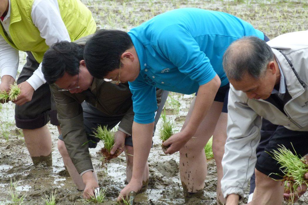 桃園市長鄭文燦(左二)和市府團隊為農博彩繪稻田插秧。 記者鄭國樑/攝影