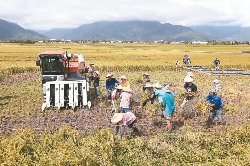 「一例一休」衝擊稻作收割。 聯合報資料照片