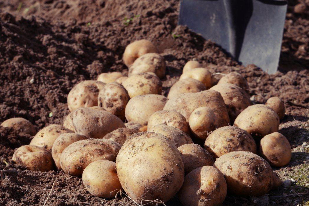 適合寒冷地方種植的馬鈴薯在江戶時代末期引進北海道,並且成為北海道主要的糧食作物之...