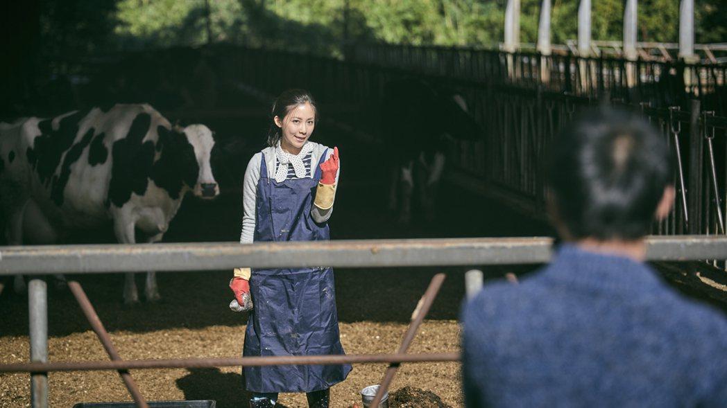 安唯綾拍「勞動之王」手拿牛糞丟黃騰浩。圖/客台提供