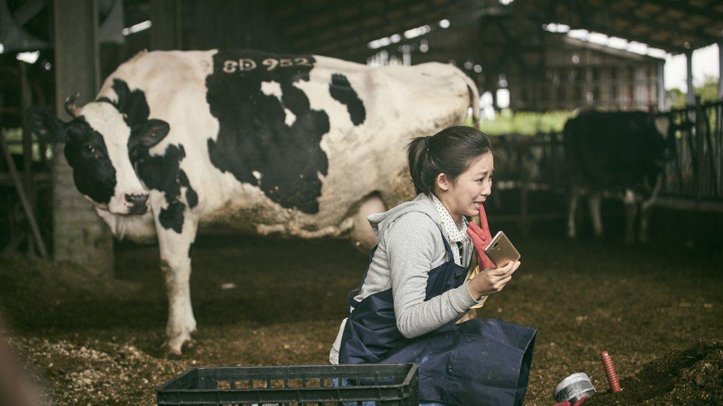 安唯綾拍「勞動之王」因咬手套誤吃牛糞。圖/客台提供