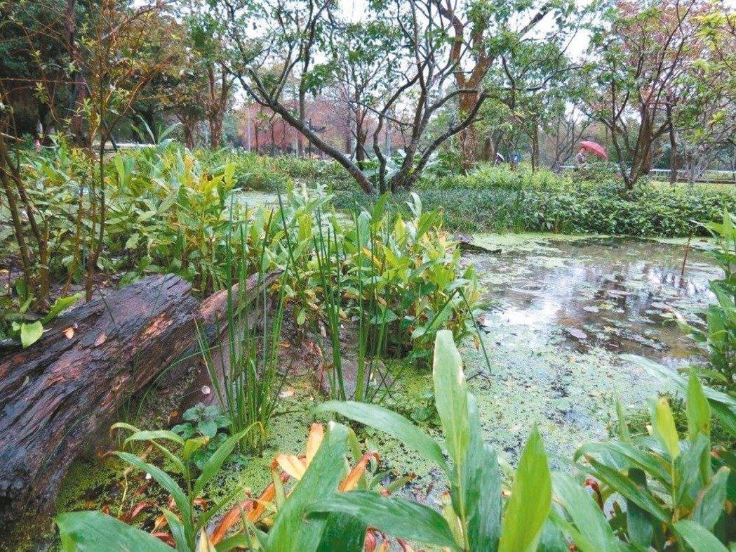 北市工務局和大安森林公園之友基金會共同合作,打造螢火蟲復育生態池;暌違25年,大...