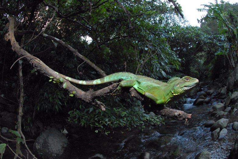 在現行《野保法》框架下,管理野生動物釋放如何修法?