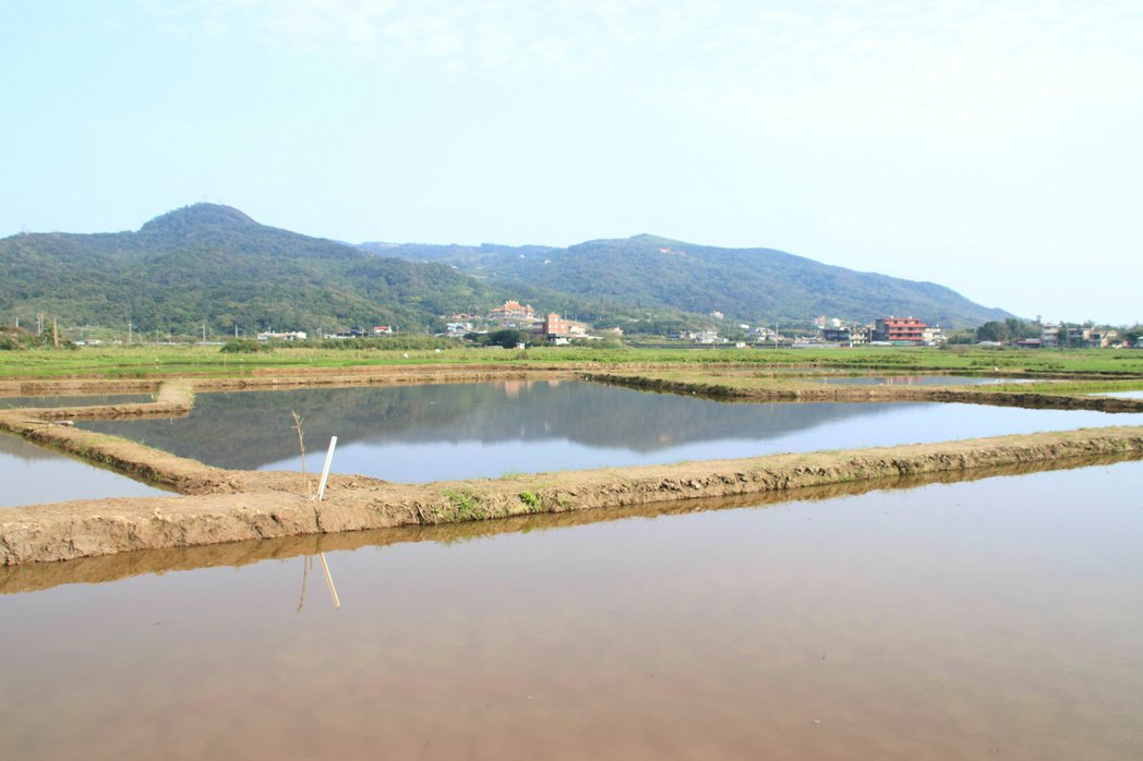清水濕地最近很熱鬧,當地位處陽明山北側、緊鄰磺溪出海口,是候鳥過境中繼站。記者曾...