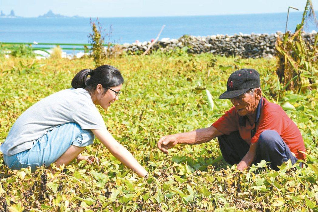 團隊深入蘭嶼,並與當地耆老在地瓜田聊天、工作。 圖/蘭後提供