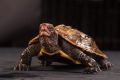 新增199種保育動物,對普羅大眾究竟有甚麼意義?