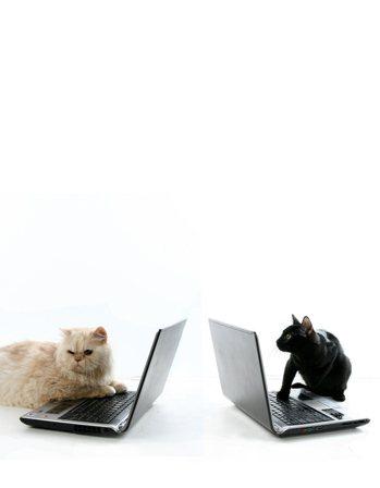 夜貓族比早起者聰明? 圖/本報資料照片