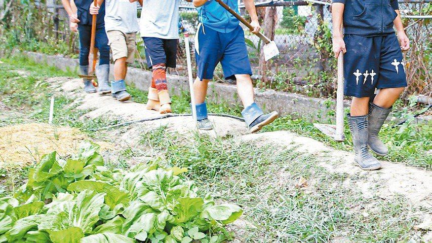 草屯療養院茄荖山莊旁的閒置空地,在戒癮居民辛勤開墾下,由荒地變菜園。 記者陳柏亨...