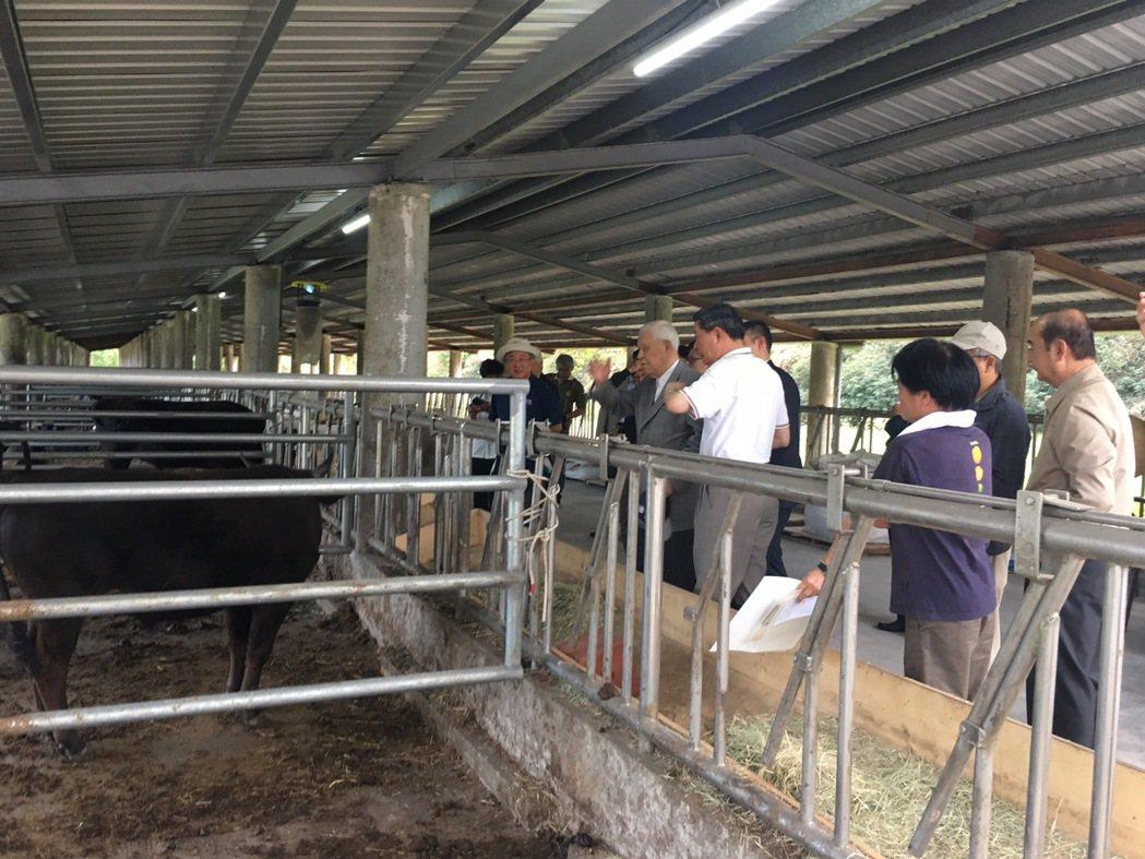前總統李登輝一月曾到花蓮新光兆豐農場,探視他養的牛隻。 圖/讀者提供