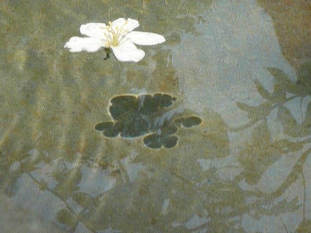 彰化福田桐花祭已經逐漸打開知名度,每逢花季都會湧來大批遊客前來賞花。本報資料照片