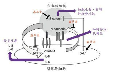 蟲草素抑制白血病細胞生長、幹細胞活性及干擾其與間葉幹細胞交互作用,並影響白血病細...