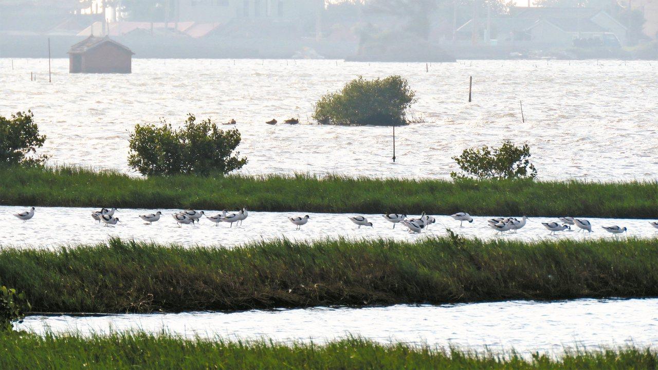 因海水倒灌而形成的成龍濕地珍貴鳥類棲息,美麗動人又充滿生機。 觀樹基金會/提供