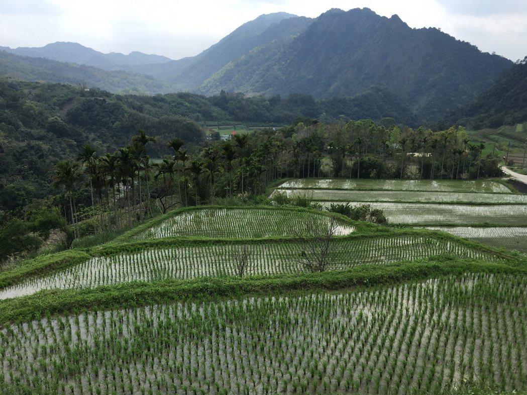 吉拉米代部落遊程中,遊客可在歷史梯田旁享用米製品下午茶時光。記者陳麗婷/攝影