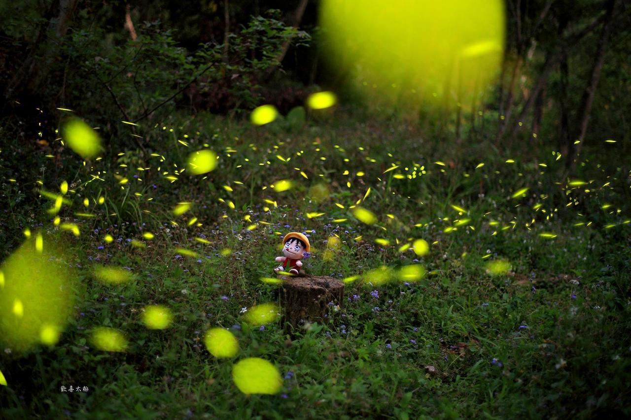 昨晚雨後雲遮月,攝影好手在中埔鄉社口嘉大實驗林場,拍攝到螢光飛舞美麗畫面。圖片/...