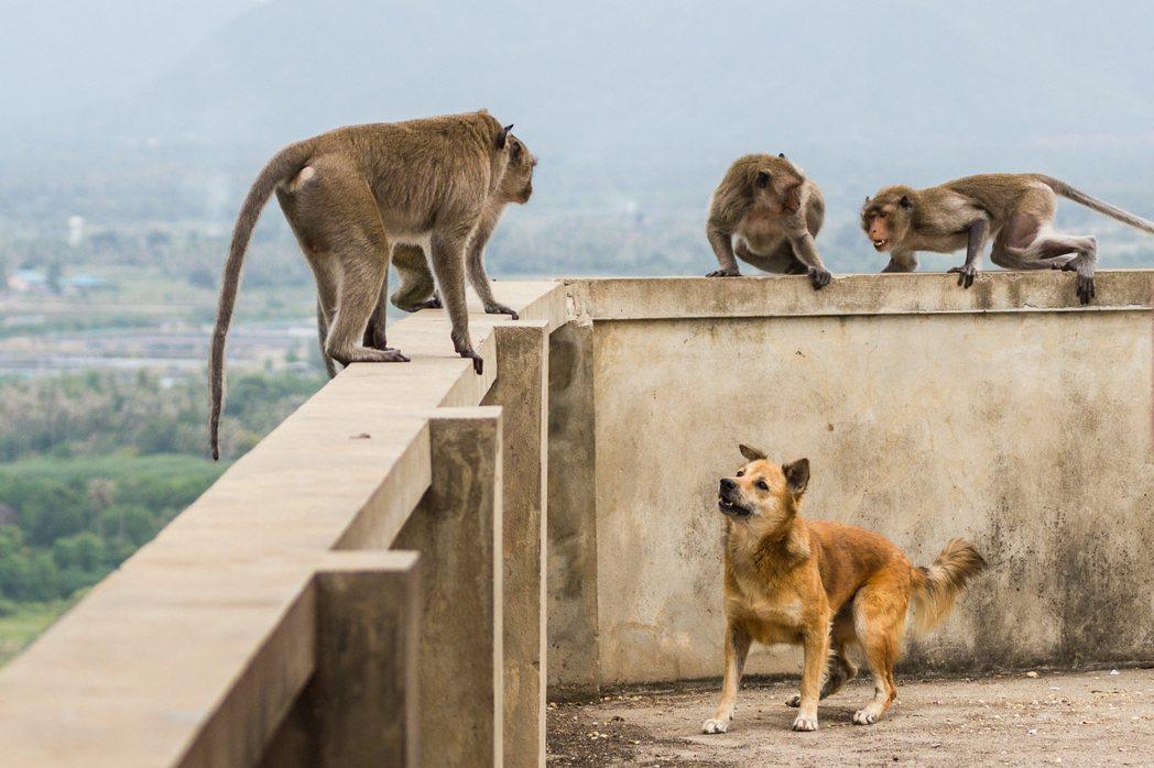 在賀札格討論人類動物互動學當中著力的核心,便是「我們在思考有關動物問題的道德情境...