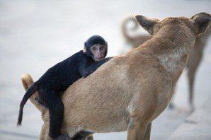 黃宗潔/救生艇中的狗和軌道上的猩猩:如何用思想實驗討論動物倫理