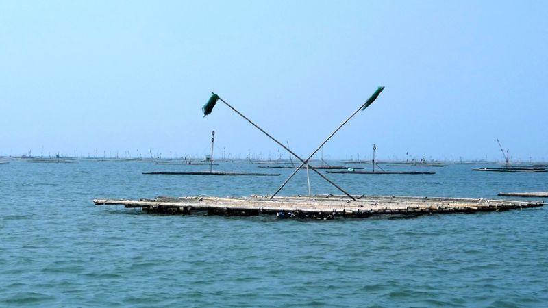 垂吊浮棚是耗時較短、經濟效益較高的養蚵技法。(圖/薛琳云)