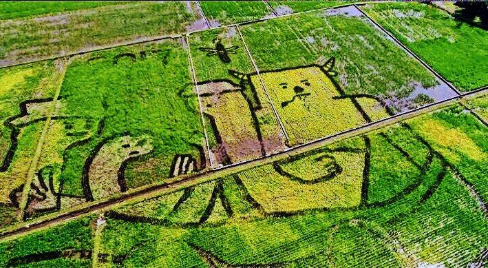 宜蘭綠色博覽會用稻作在冬山火車站農田裡種出一幅巨畫「大地畫布」,攝影家稻草龍用空...