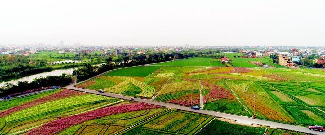 宜蘭綠色博覽會用在花草在冬山火車站東側農地上,織出6公頃的巨大彩畫。圖/林聖凱攝...