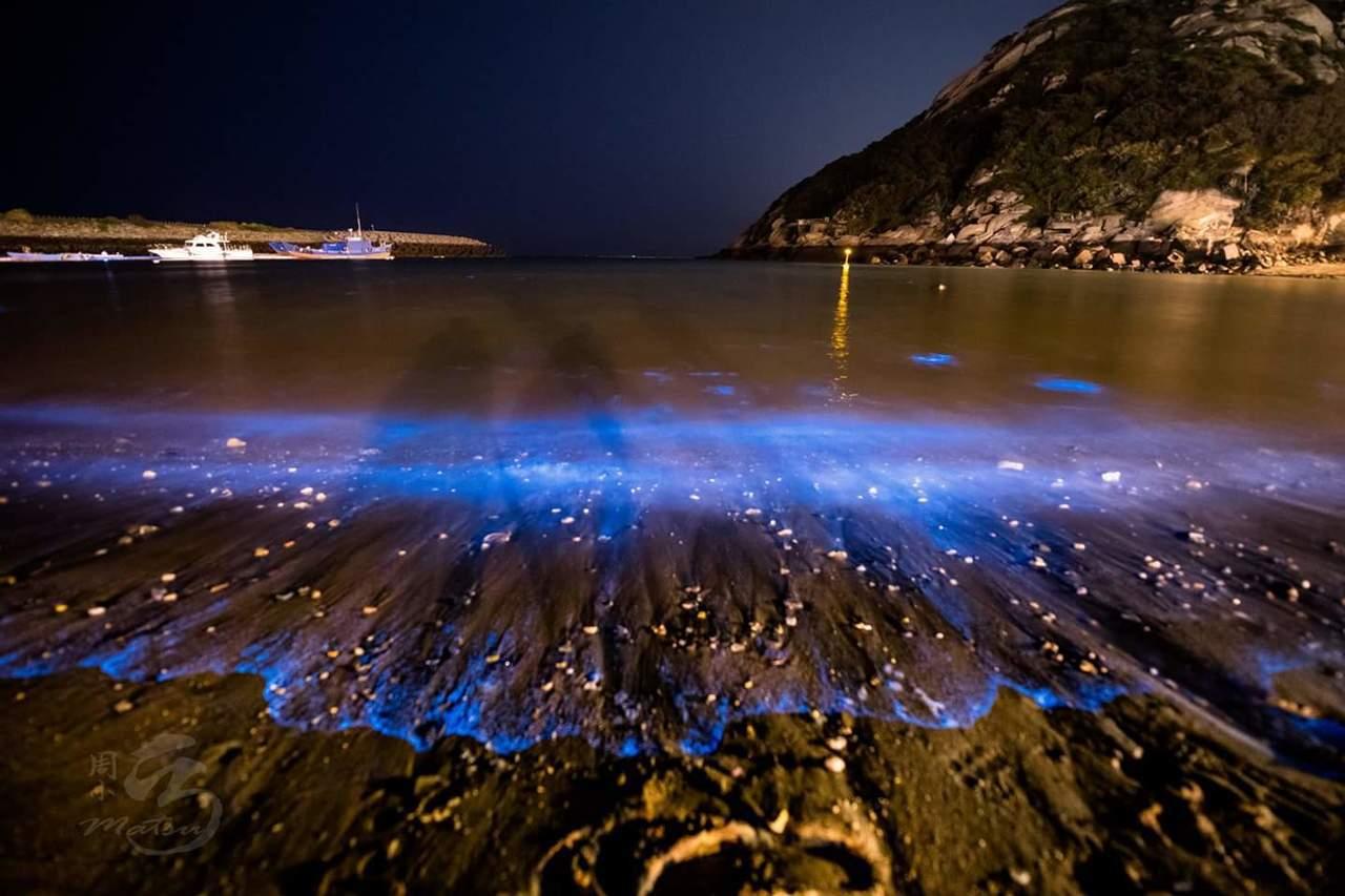 馬祖藍眼淚每年4月進入好發期,15日晚上為今年度第一波爆量。圖/周治孝提供