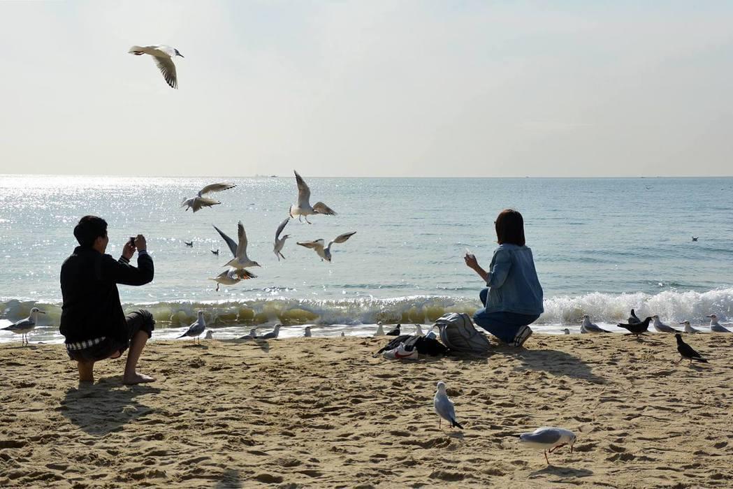 海雲台海水浴場是情侶約會勝地。記者劉孟玲/攝影