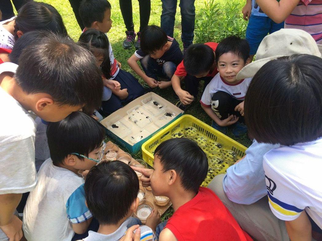 民眾今天在頭汴坑太平苗圃放養千隻黃緣螢幼蟲。記者趙容萱/攝影
