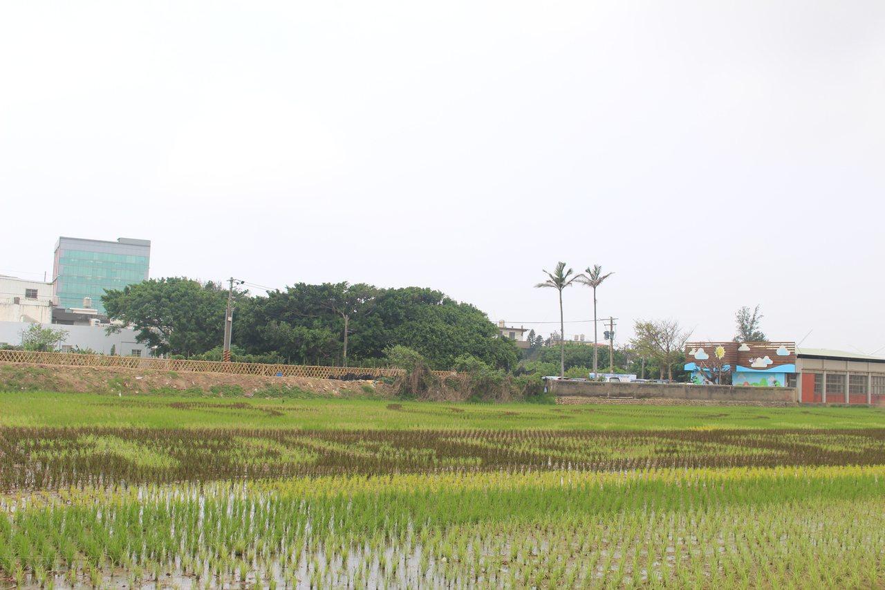 2公頃的彩繪稻田專區有春分時刻種下的秧苗,由蕭青陽設計的農博主視覺及多樣化蔬果圖...