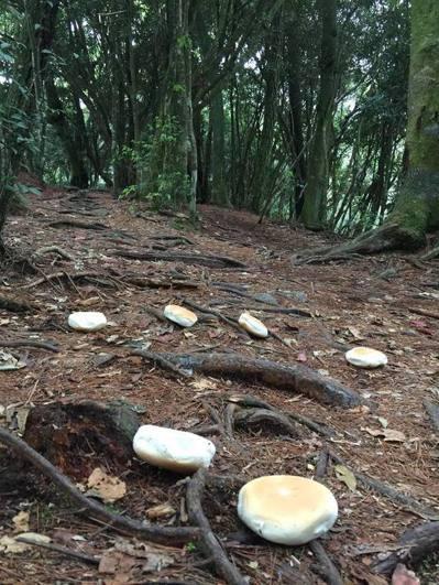 熱門的鳶嘴山登山步道被灑滿麵包,網友在「爆料公社」、「山岳智庫」爆料,大罵丟麵包...