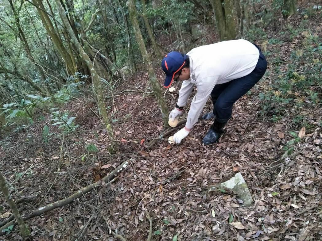 東勢林管處人員到鳶嘴山步道撿拾飯粒及麵包。圖/東勢林管處提供