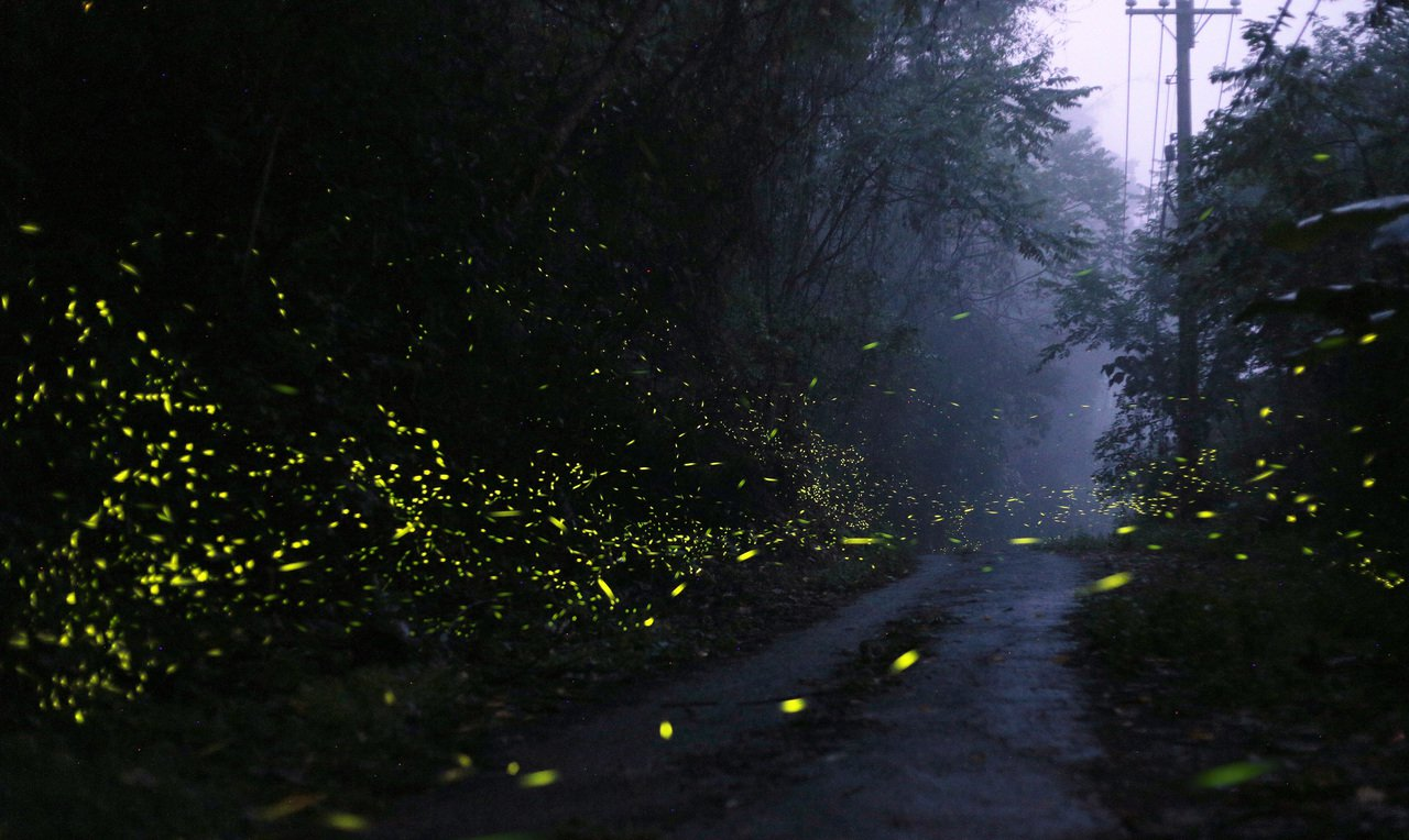 台南關山社區大光廊也是欣賞螢火蟲的景點。記者劉學聖/攝影