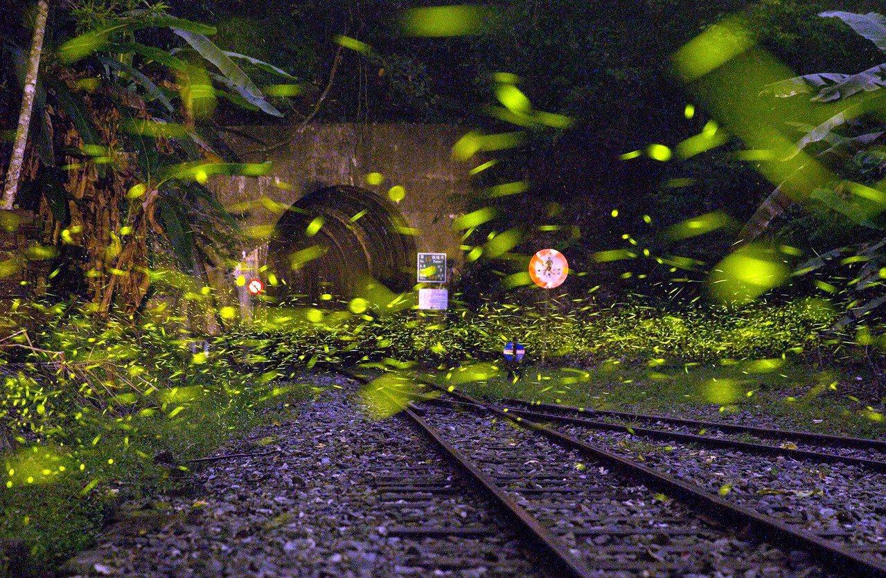 阿里山森林鐵路梨園寮車站是一處無人招呼站,保有森鐵早期風貌,近來螢火蟲漫天飛舞,...