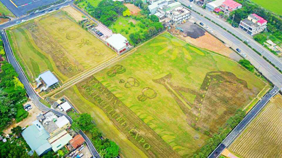 桃園農博彩繪稻田占地2公頃,「種」出8種蔬果,相當壯觀。記者張雅婷/攝影