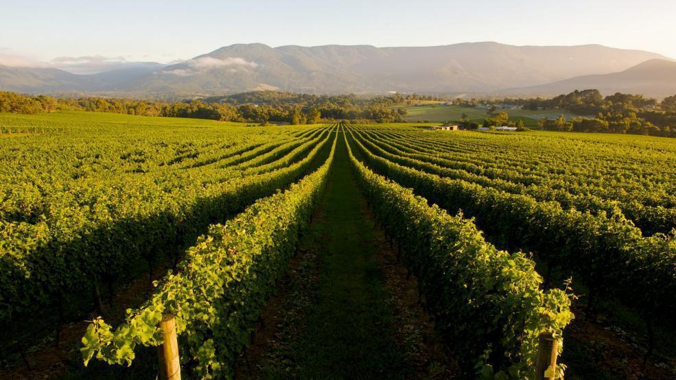 ・澳洲可是世界上知名的頂級葡萄酒產地。(圖/australia.com)